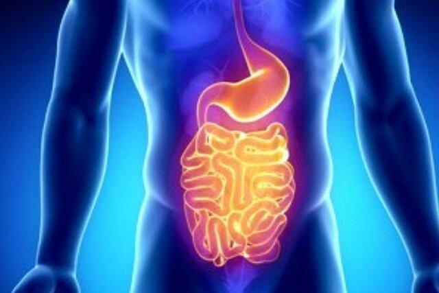نقش باکتری های روده در بهبود علائم اضطراب